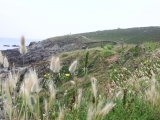 12-grass